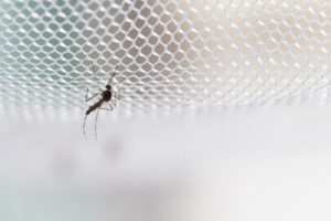 Malaria treatments from PostMyMeds UK online pharmacy